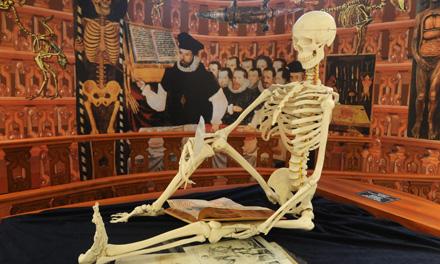 Az emberi csontváz.