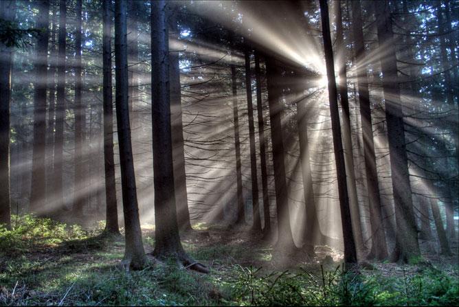 Fák mögül behatoló éles fény; erdei kép.