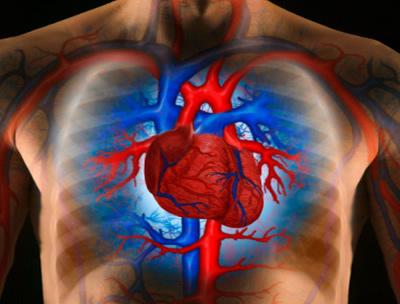 Emberi szív.