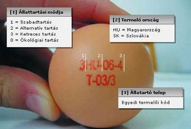 A tojáson lévő jelzések jelentése.