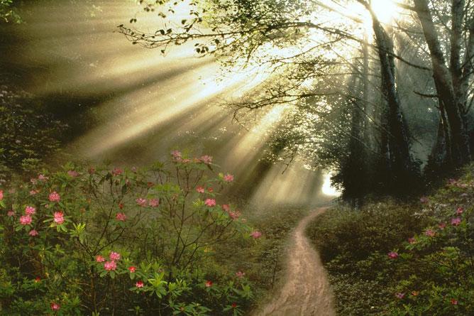 Beszűrődő napfény az erdő fái között.