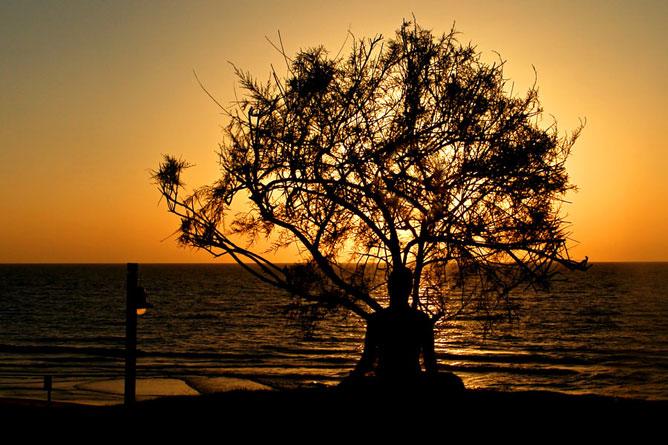 Fa alatt ülő emberi sziluett a naplementében.
