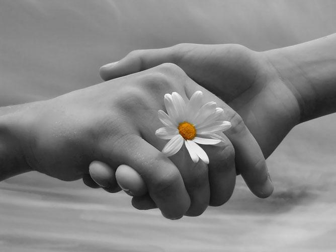 Két kéz amint fogja egymást és egy fehér margaréta van az újak között.