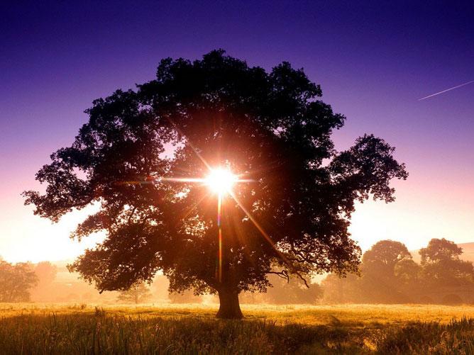 Sugárzó nap egy fa mögött.