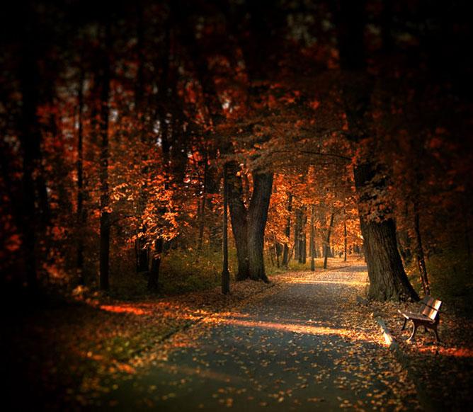 Szép őszi színekben pompázó sétány.