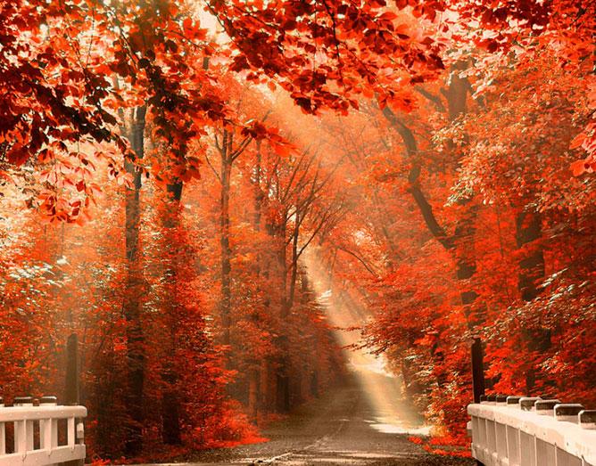 Őszi erdei út.