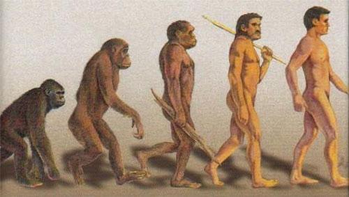 Evolució.