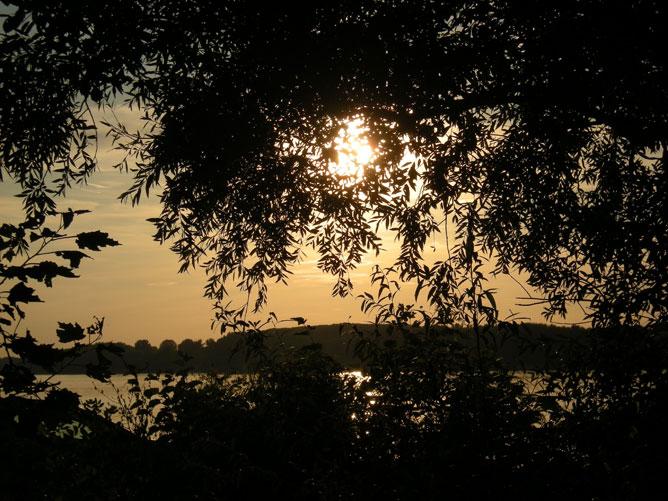 Lemenő nap a fák mögött