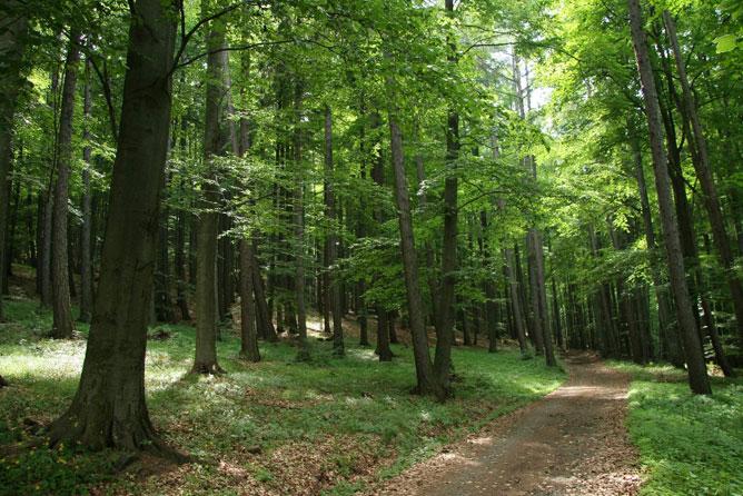 Erdő.