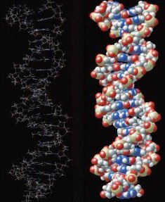 Emberi DNS.