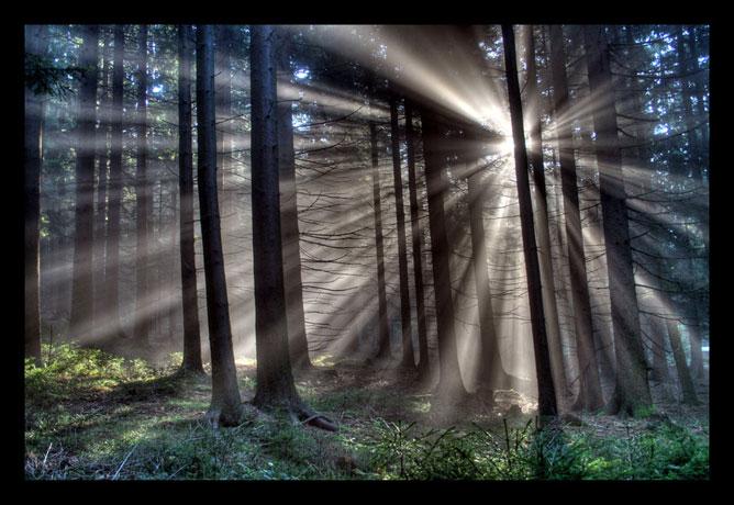 Az erdő csendje.