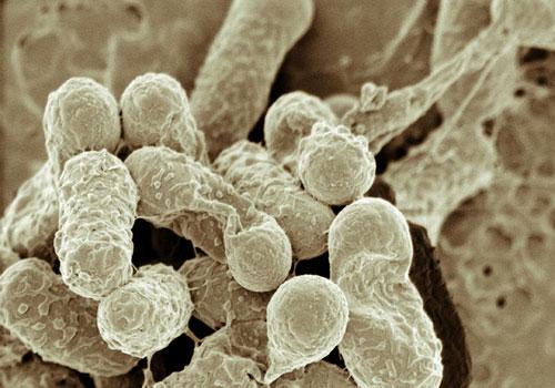 Baktériumok.