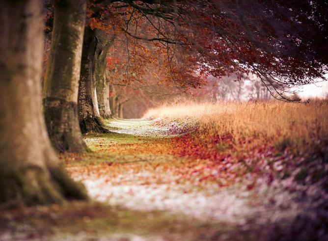 Az ősz kezdete.