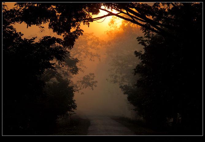 Napfelkelte a ködös erdei útról .