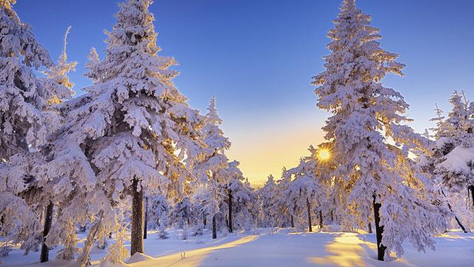 Téli erdő.