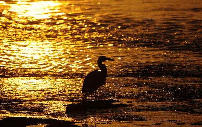 Arany naplemente.