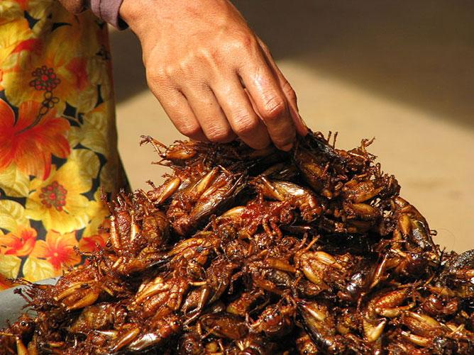 rovarok mint élelmiszer.