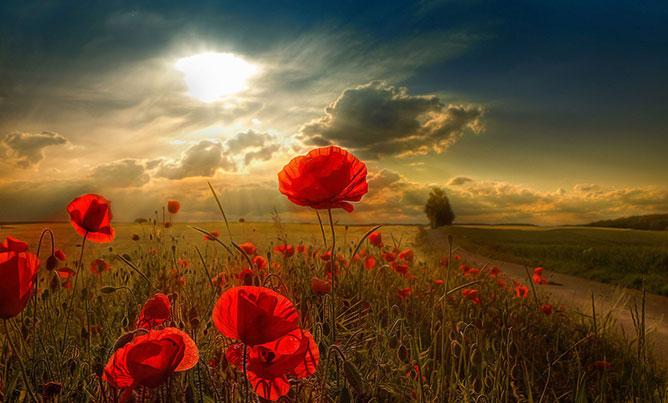 Sunrise in the fields.