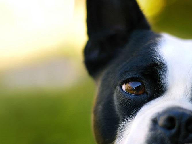 kutya.