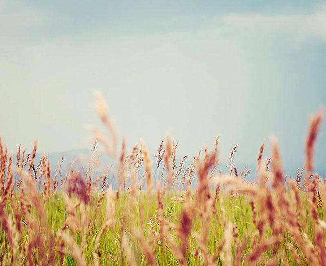 virágos mező.