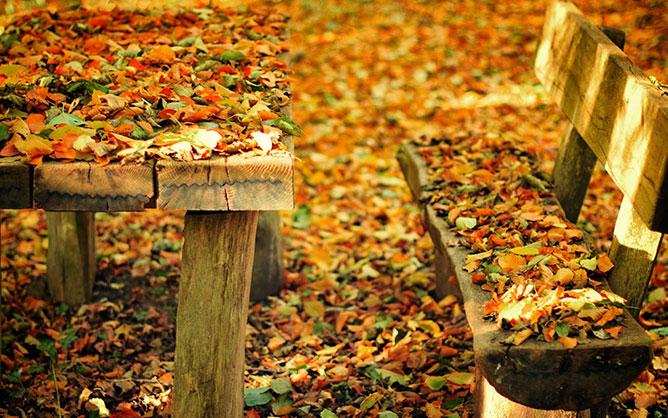 őszi hangulat.