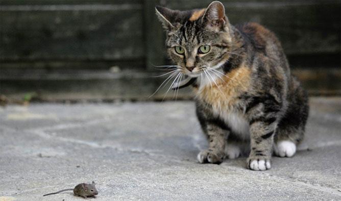 macska egér találkozás.