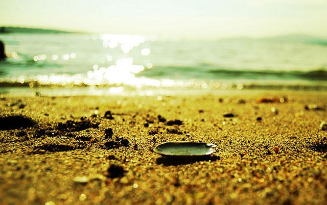 kagyló a tengerparton.