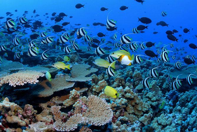 tengeri élővilág