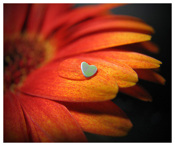 flower and heart.