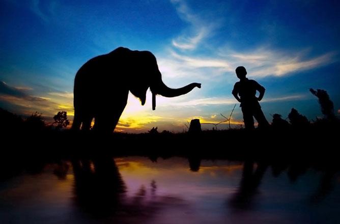 elefánt és kisfiú .
