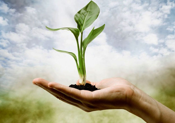 növény-élet.