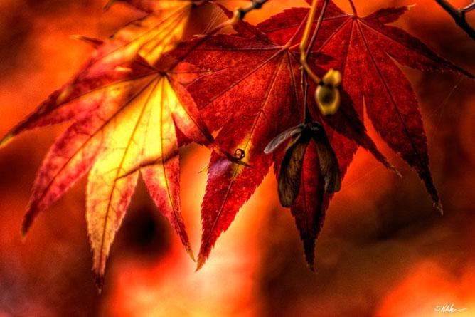 napsugár az őszi színvarázson át.