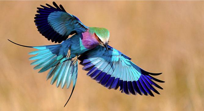 egzotikus madarak.