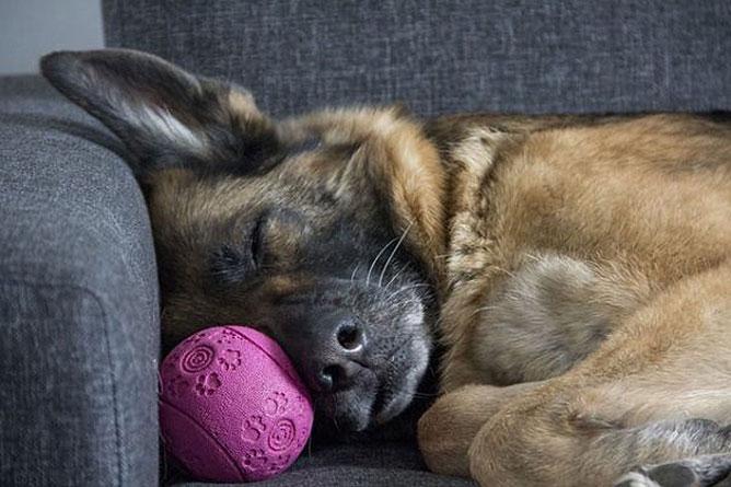 Alvó kutya.