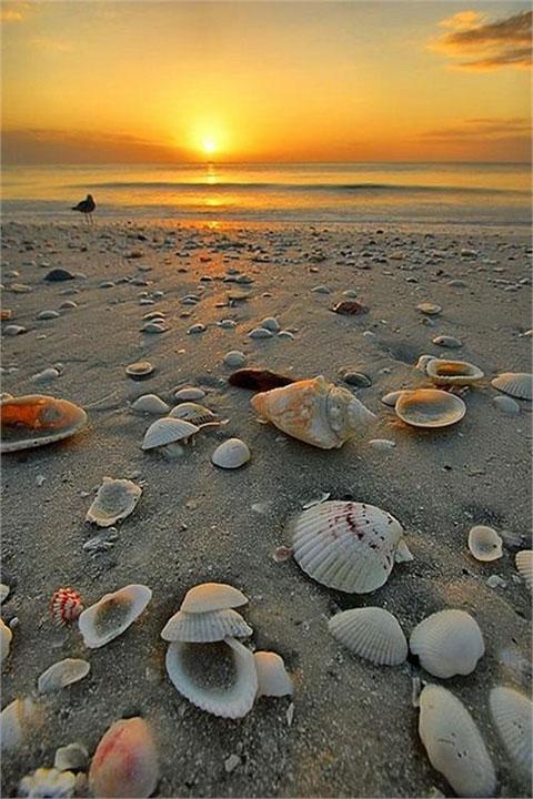 tengerparti naplemente.
