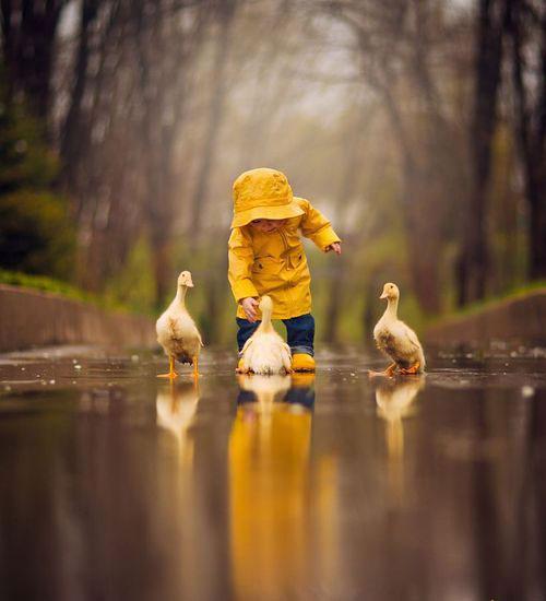 Játék az esőben a kacsákkal.