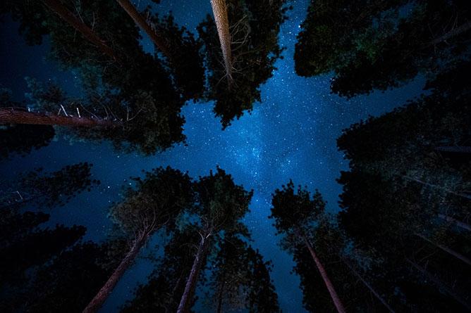 Csillagok a fák felett