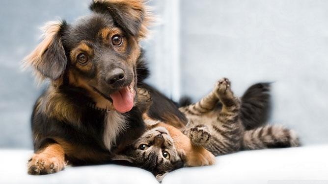 kutya- macska baratság.