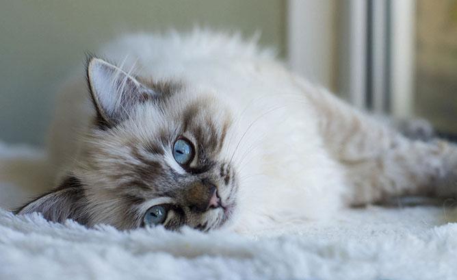 Macska.