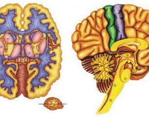 Az emberi test – A tobozmirigy