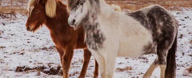 Az emlősök összementek, amikor a Föld felmelegedett a régmúltban